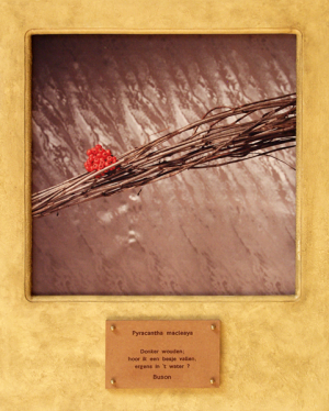Pyracantha macleaya